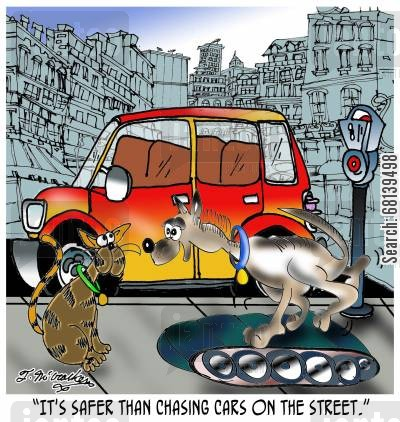 dog chasing cars cartoon humor: 'It's safer than chasing cars on the street.'