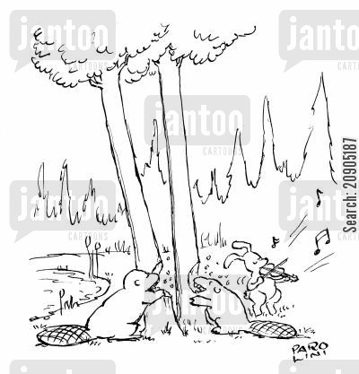 fallen tree cartoon humor: Beavers gnawing down trees.
