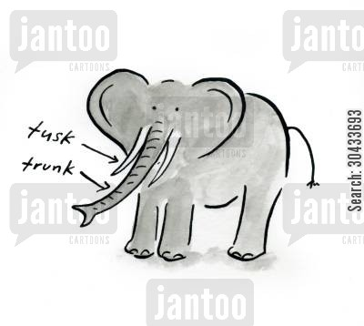 trunks cartoon humor: Elephant