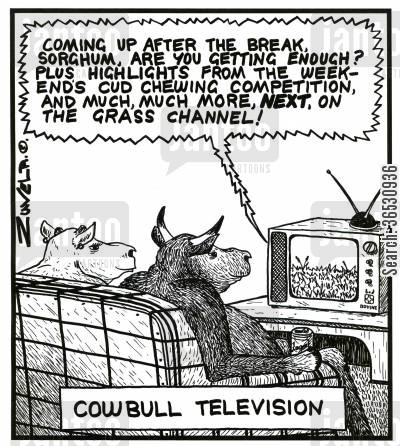 bone idle cartoon humor: 'Coming up after the break, Sorgham, are you getting enough? Plus highlights from the weekend's cud chewing competition, and much,much more, NEXT, on the Grass Channel!' (Cowbull Television - cows watching television)
