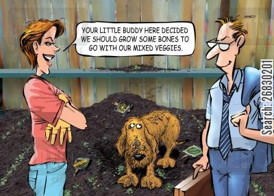 allotment cartoon humor: 'Your little buddy here decided we should grow some bones to go with our mixed veggies.'