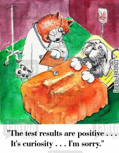 curiosity killed the cat cartoon humor: The test results are positive. It's curiosity...I'm sorry.