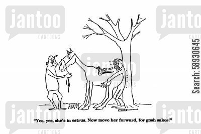 job hazards cartoon humor: 'Yes, yes, she's in estrus. Now move her forward, for gosh sakes!'