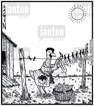 clean clothes cartoon humor: Hen hanging out washed feathers.