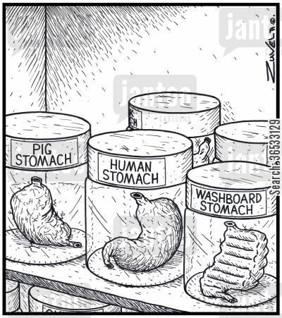 muscly cartoon humor: Pig Stomach Human Stomach Washboard Stomach.