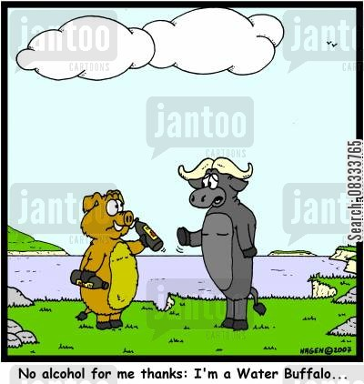 teetotal cartoon humor: No alcohol for me thanks: I'm a Water Buffalo...