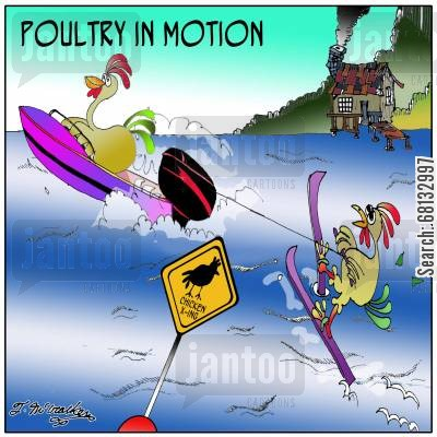 chickens poultry cartoon humor: Poultry in Motion