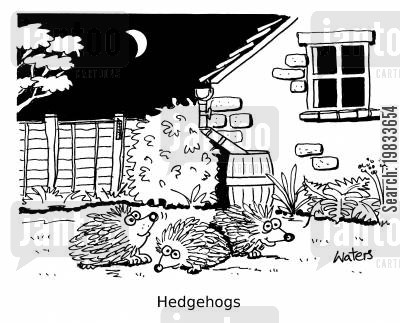 nighttimes cartoon humor: Hedgehogs