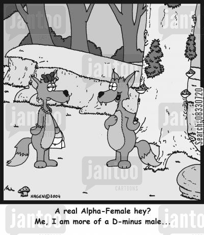 alpha cartoon humor: 'A real Alpha-Female hey? Me, I am more of a D-minus male...'