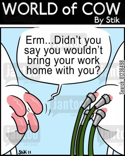 dairy farmers cartoon humor: 'Erm, didn't you say you wouldn't bring your work home with you?'