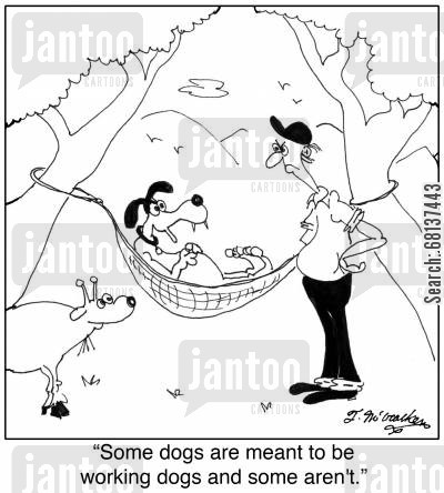 ranch hand cartoon humor: 'Some dogs are meant to be working dogs and some aren't.'