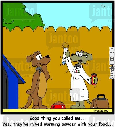 tape worms cartoon humor: 'Good thing you called me... Yes, they've mixed worming powder with your food...' (colour)