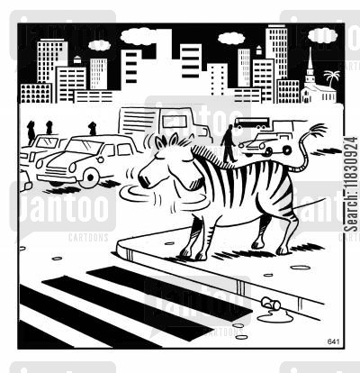 traffic cartoon humor: Zebra crossing.