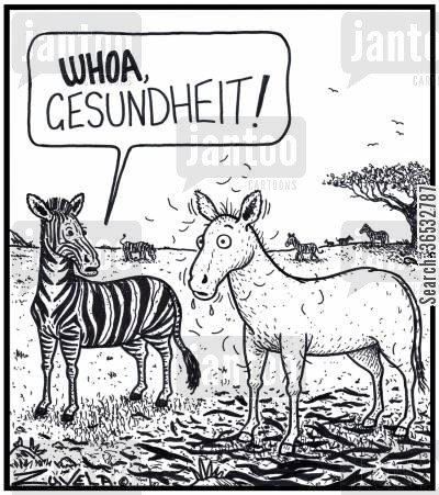markings cartoon humor: Zebra: 'WHOA, Gesundheit!'