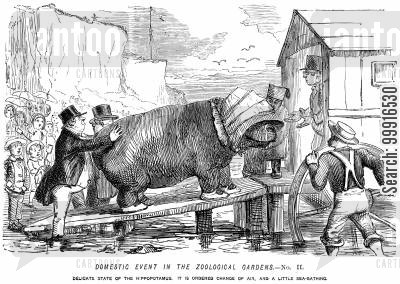 bathing machine cartoon humor: Domestic event in the Zoological Gardens No. II. - Delicate state of the hippopotamus