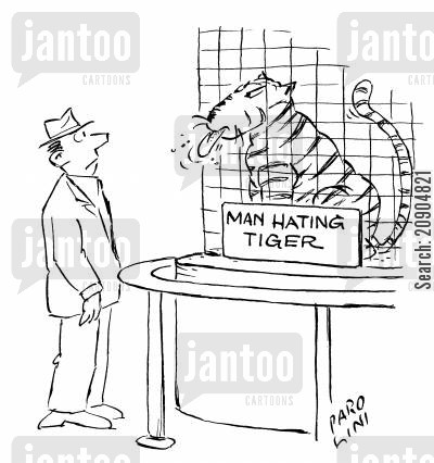 taunting cartoon humor: Man eating tiger sticking its tongue out at man.