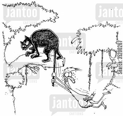 animal cruelty cartoon humor: Jungle Man accidentally swinging froma pathers tail.