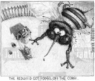 mosquito cartoon humor: 'The reduviid got fodgel off the corgi.'