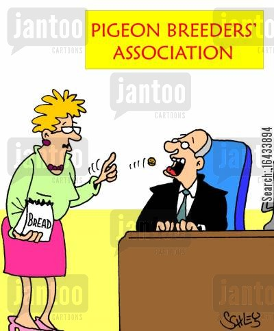 bread crumbs cartoon humor: Pigeon Breeders' Association.
