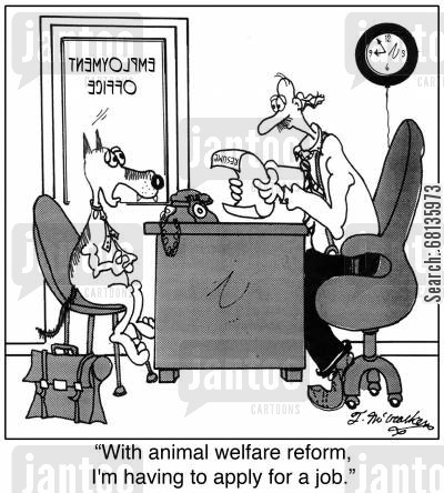 career adviser cartoon humor: 'With animal welfare reform, I'm having to apply for a job.'