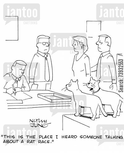 cat behavior cartoon humor: 'This is the place I heard someone talking about a rat race.'