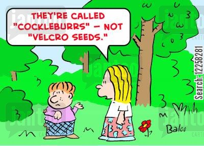sticky seeds cartoon humor: 'They're called 'cockleburrs,' not 'velcro seeds.''