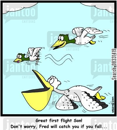 first flight cartoon humor: Great first flight Son! Don't worry, Fred will catch you if you fall...