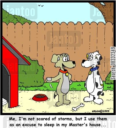 thunderstorms cartoon humor: 'Me, I'm not scared of storms, but I use them as an excuse to sleep in my Master's house...'