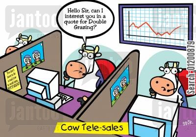 double glazing cartoon humor: COWS: Cow telesales