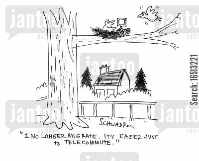 telecommute cartoon humor: 'I no longer migrate. It's easier just to telecommute.'