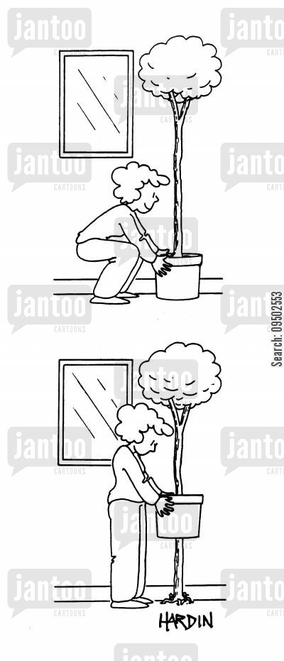 indoor plants cartoon humor: Tree has taken root in the house.