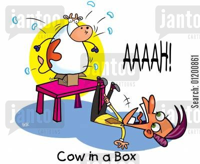 jack in a box cartoon humor: COWS: Cow in a box