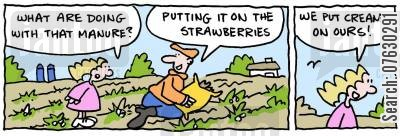strawberries and cream cartoon humor: Garden.