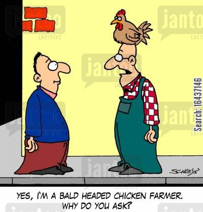 hair losses cartoon humor: 'Yes, I'm a bald headed chicken farmer. Why do you ask?'