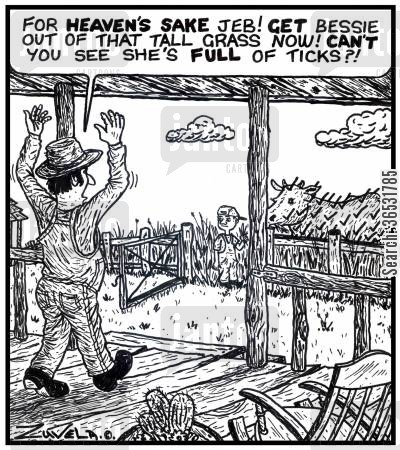 cattle farmers cartoon humor: Farmer to son: 'For heaven's sake Jeb! Get Bessie out of that tall grass now! Can't you see she's full of ticks?!'