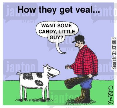 slaughterhouse cartoon humor: How they get veal...