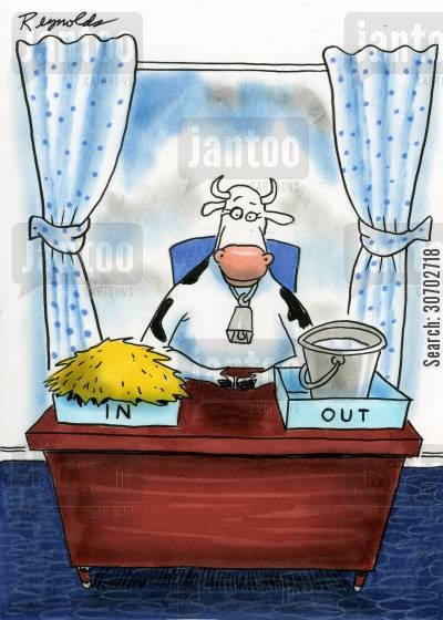 milking time cartoon humor: Cow InOut Trays.