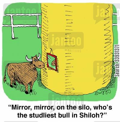 studs cartoon humor: 'Mirror, mirror, on the silo, who's the studliest bull in Shiloh?'