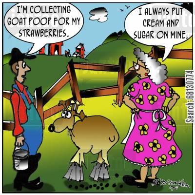goatfarms cartoon humor:  'I'm collecting goat poop for my strawberries.' 'I always put cream and sugar on mine.'