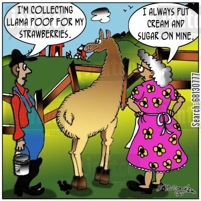 llama farms cartoon humor: 'I'm collecting llama poop for my strawberries.' 'I always put cream and sugar on mine.'
