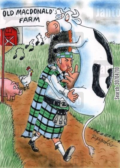 bagpiper cartoon humor: Scotsman Playing Cow Bagpipes.