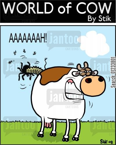 april fools day cartoon humor: A cow playing a prank on the flies.