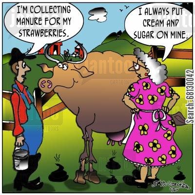 strawberries and cream cartoon humor: 'I'm collecting manure for my strawberries.' The woman says, 'I always put cream and sugar on mine.'