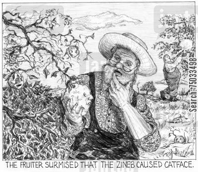 orchard cartoon humor: 'The fruiter surmised that the zineb caused catface.'