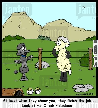 sheared cartoon humor: 'At least when they shear you, they finish the job... Look at me! I look ridiculous...'