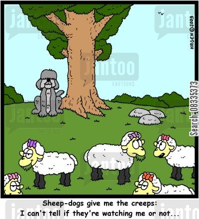 sheep dogs cartoon humor: 'Sheep-dogs give me the creeps: I can't tell if they're watching me or not...'