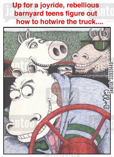 car theft cartoon humor: Up for a joyride, rebellious barnyard teens figure out how to hotwire the truck....