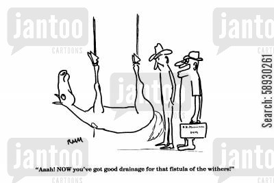 drainage cartoon humor: 'Aaah! NOW you've got good drainage for that fistula of the withers!'