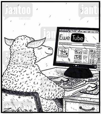 google cartoon humor: Ewe Tube A Ewe checking out the sheep world's version of You Tube.