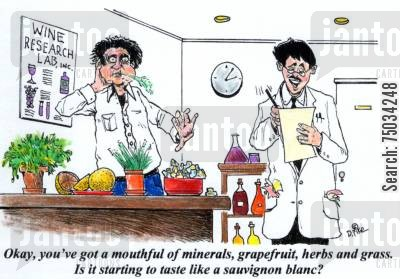 grapefruit cartoon humor: 'Okay, you've got a mouthful of minerals, grapefruit, herbs and grass. Is it starting to taste like a sauvignon blanc?'